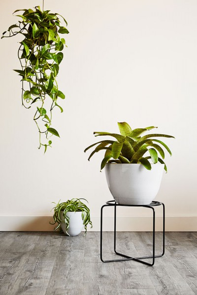 #ivy muse #plant stands #perth #design #homewares perth