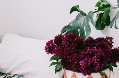 #pop and scott #pots #plants #designers #styling perth #design perth #pots perth