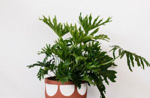 #pop and scott #pots #plants #designers #styling perth #design perth #pots perth