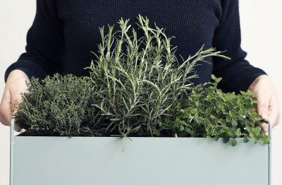 Small Plant Box_image